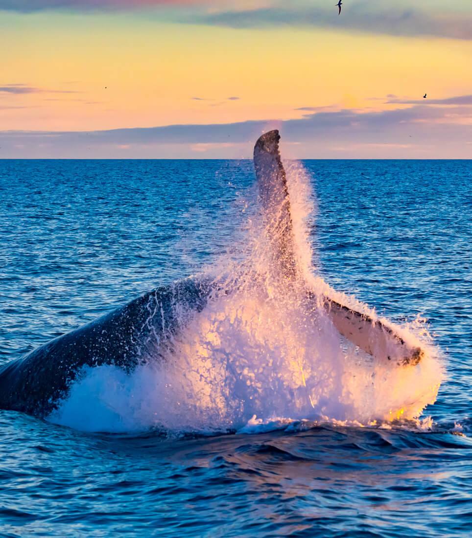 Highlight-5---Whale-Watching---shutterstock_1052587370