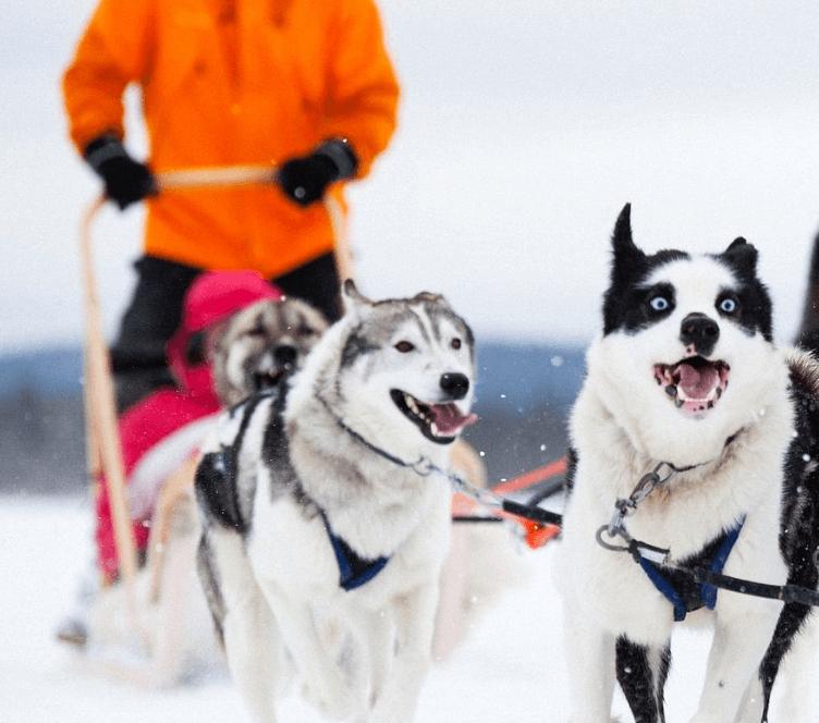 Huskies_credits-Mikko-Ryhänen