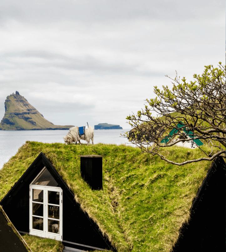 Sheep-on-roof,-Credits---Visit-Faroe-Islands