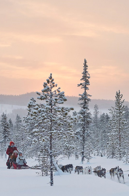 anna_öhlund-dog_sledding_adventure-6469